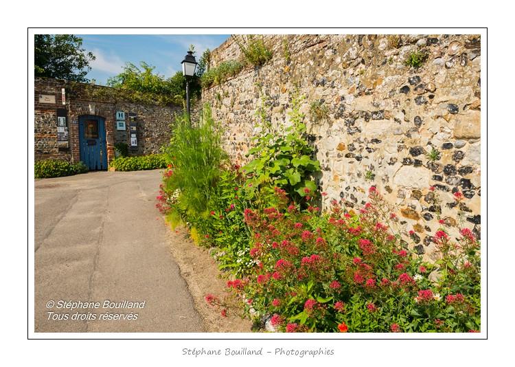 Saint_Valery_Herbarium_29_06_2013_123-border