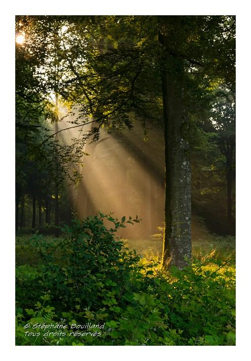 Lumière sacrée…