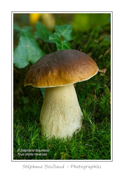 """""""The"""" champignon"""