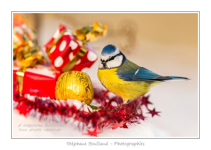 Pour Noël, offrez un beau tirage !
