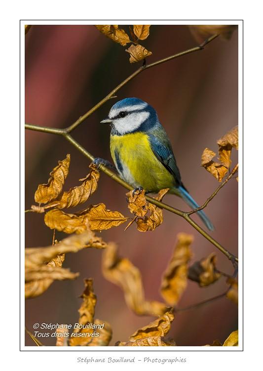 Premier affût photo à la mangeoire avec les oiseaux du jardin