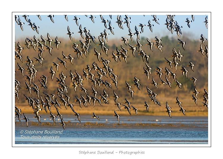 Avec les oiseaux, en baie de Somme