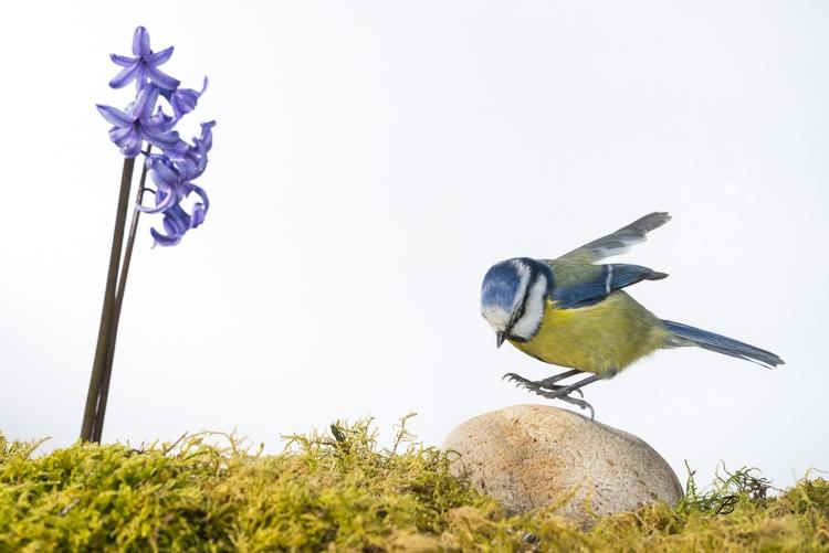"""Création de la section """"Jardins d'oiseaux"""""""