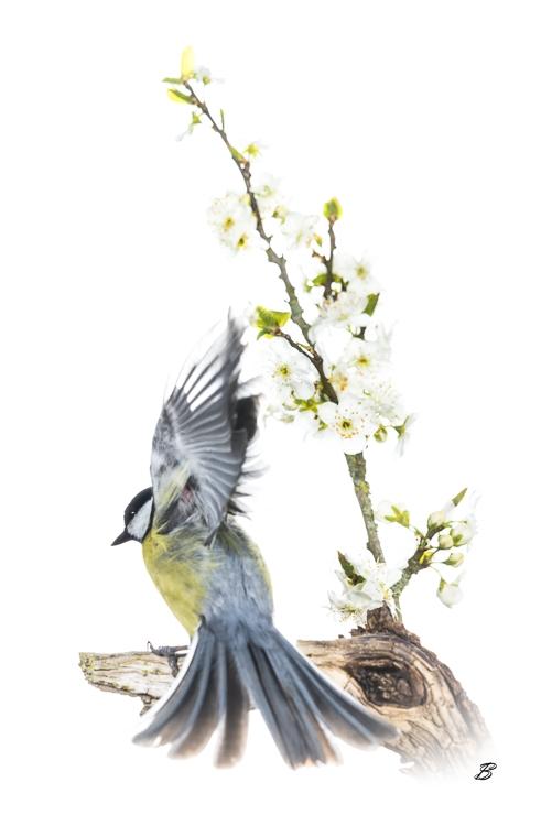 Oiseaux sur fond blanc en studio extérieur