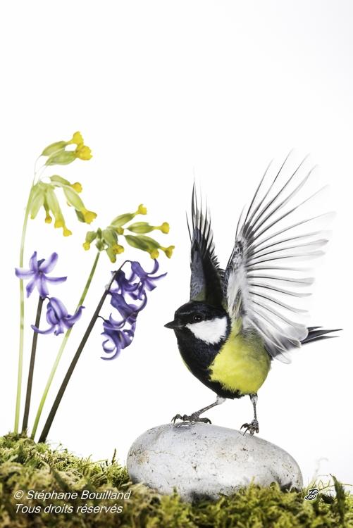 Nouvelle série sur les oiseaux du jardin…