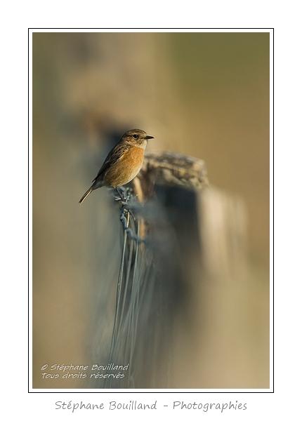 Quelques oiseaux…