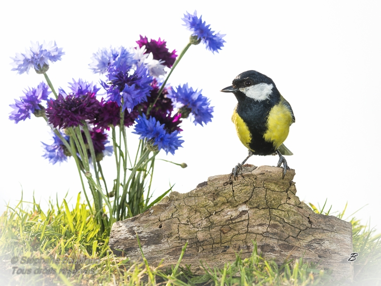 Page Facebook de jardin d'oiseaux