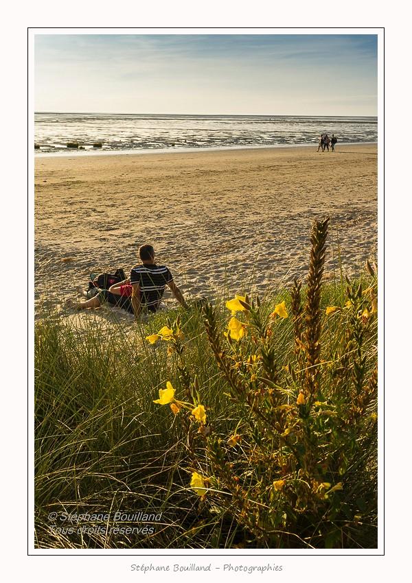 Saison : été - Lieu : Le Crotoy, Baie de Somme, Somme, Picardie, France