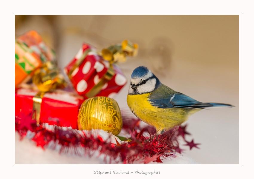 Pour vos commandes de Noël…