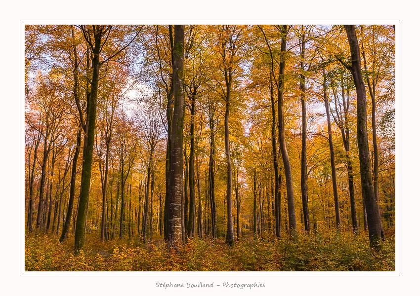 La forêt de Crécy aux couleurs de l'Automne