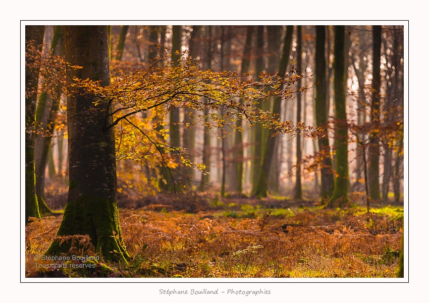 Foret_Crecy_Automne_29_11_2014_0005-border