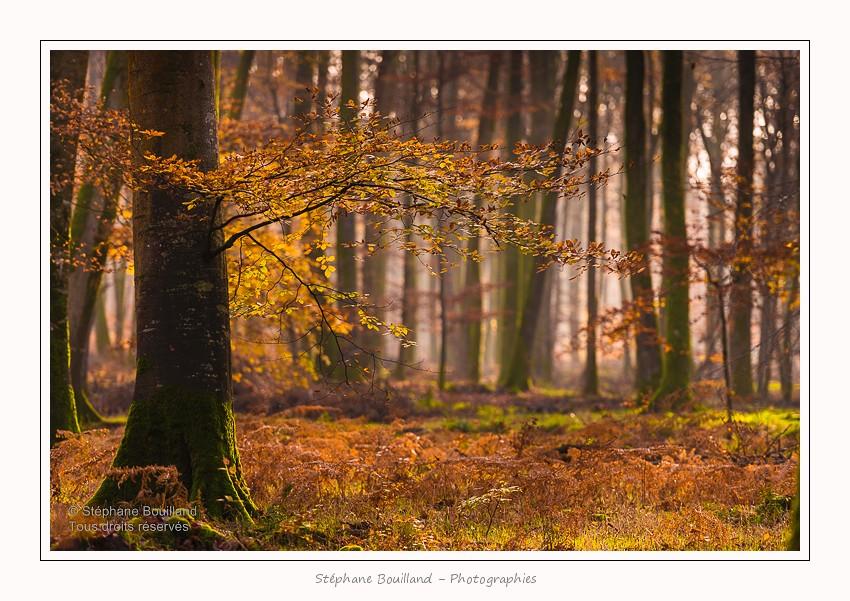 Couleurs d'automne en forêt de Crécy