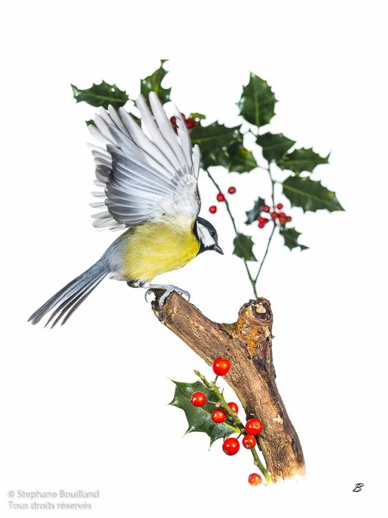 Ambiance noël pour les oiseaux du jardin