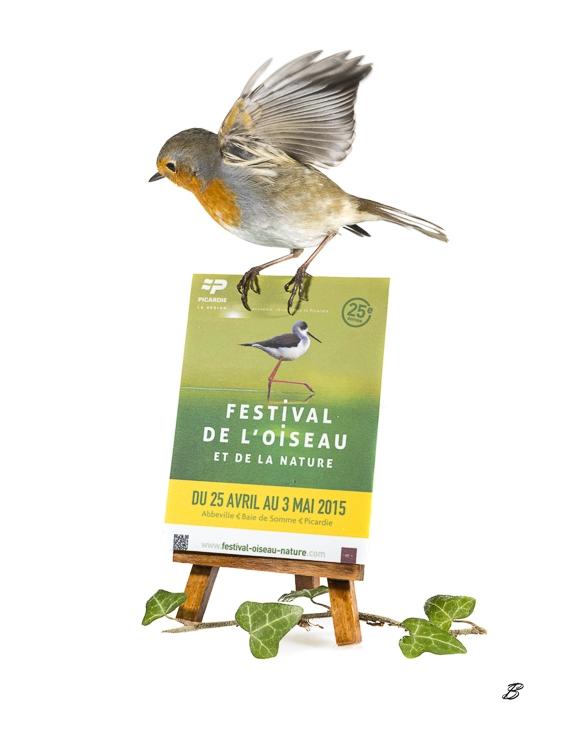 Festival de l'oiseau 2015 : les invitations sont lancées !