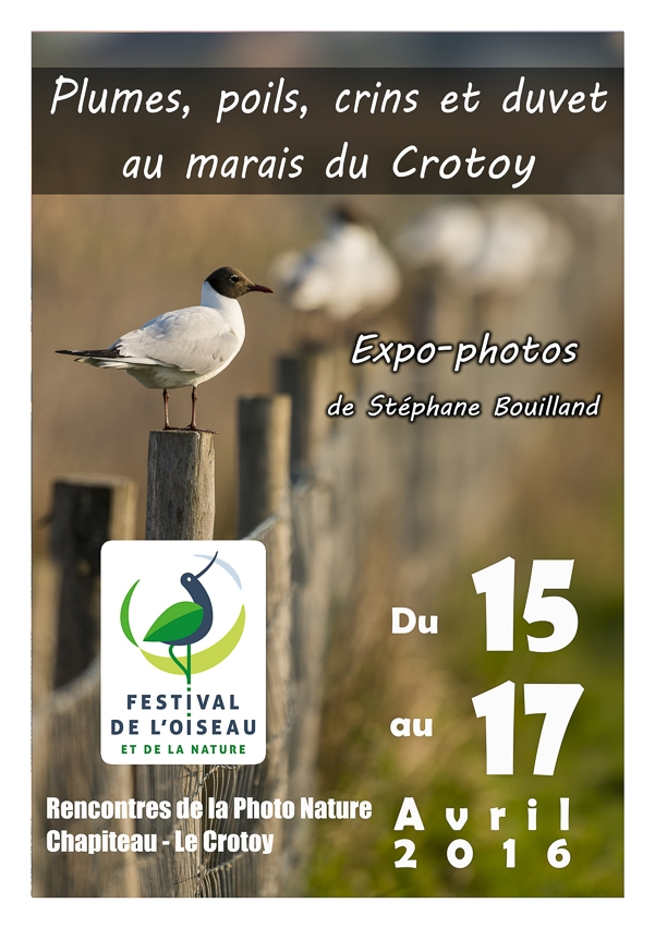 Expo-Photo au Festival de l'Oiseau 2016 !