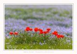 Saison : Printemps - Lieu : Le Crotoy, Baie de Somme, Somme, Picardie, Hauts-de-France,France