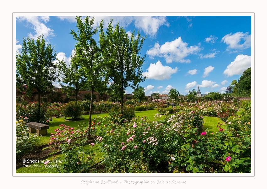 Saison : été - Lieu : Parc du chateau de Rambures, Somme, Picardie, Hauts-de-France, France