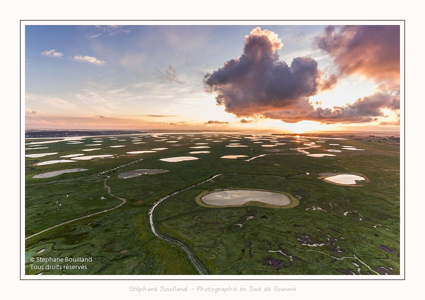 Saison : été - Lieu : Le Crotoy,Baie de Somme, Somme, Picardie, Hauts-de-France,France
