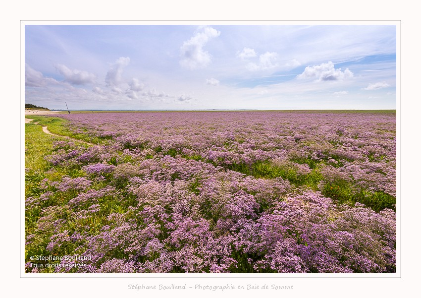 Saison : été - Lieu : Plages de la Maye, Le Crotoy, Baie de Somme, Somme, Picardie, Hauts-de-France,France