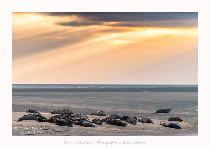 Les phoques à Berck-sur-mer (Côte d'Opale)