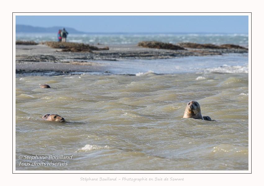 Moment de grâce avec les phoques