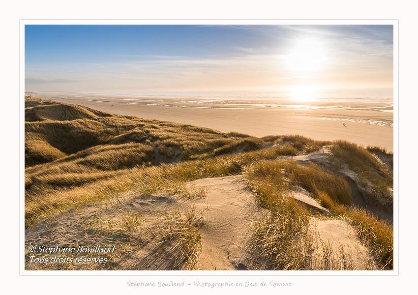 Les dunes du Marquenterre, entre Fort-Mahon et la baie d'Authie