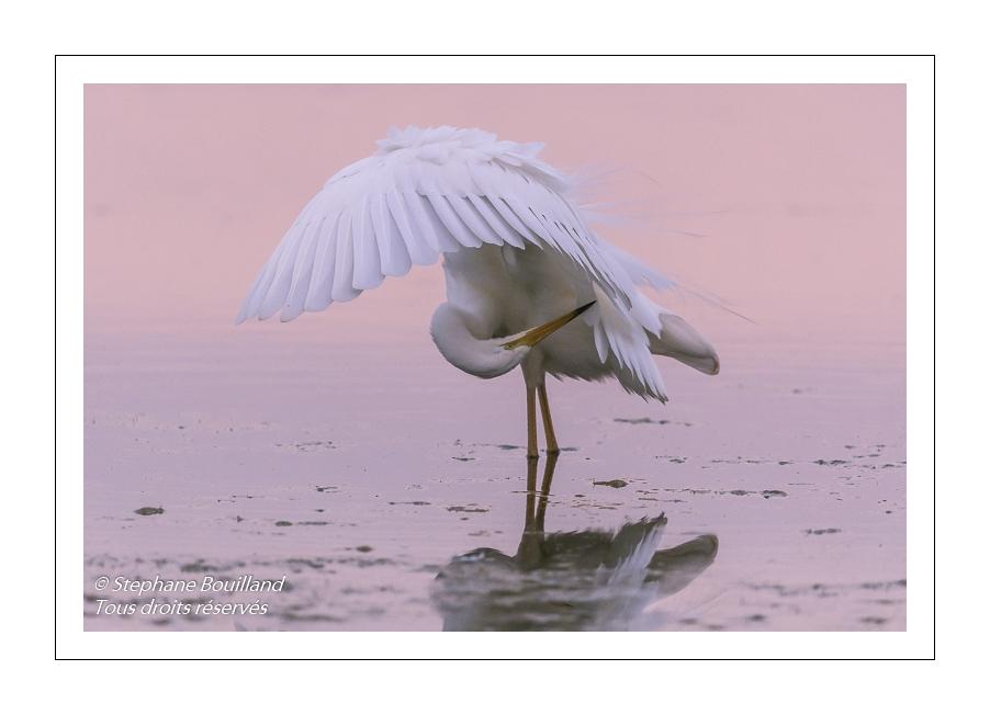 Les oiseaux des marais de la Baie de Somme