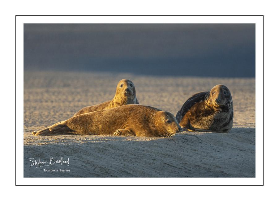 Les Phoques à Berck-sur-mer