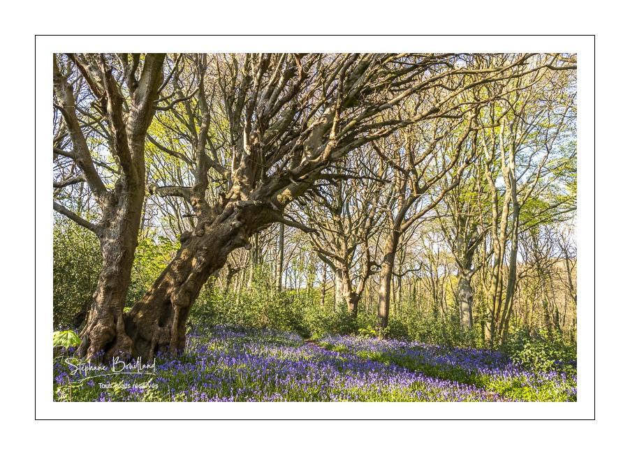Un printemps au bois de Cise