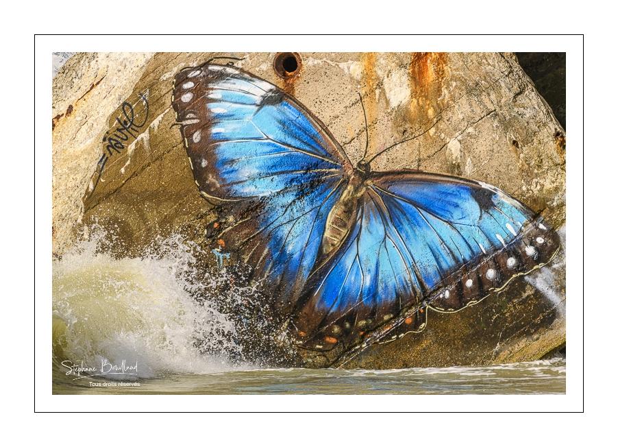 Un joli papillon sur le blockhaus du Hourdel