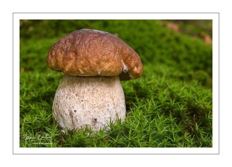 Les champignons en forêt de Crécy