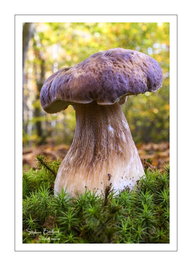 Fin de saison pour les champignons