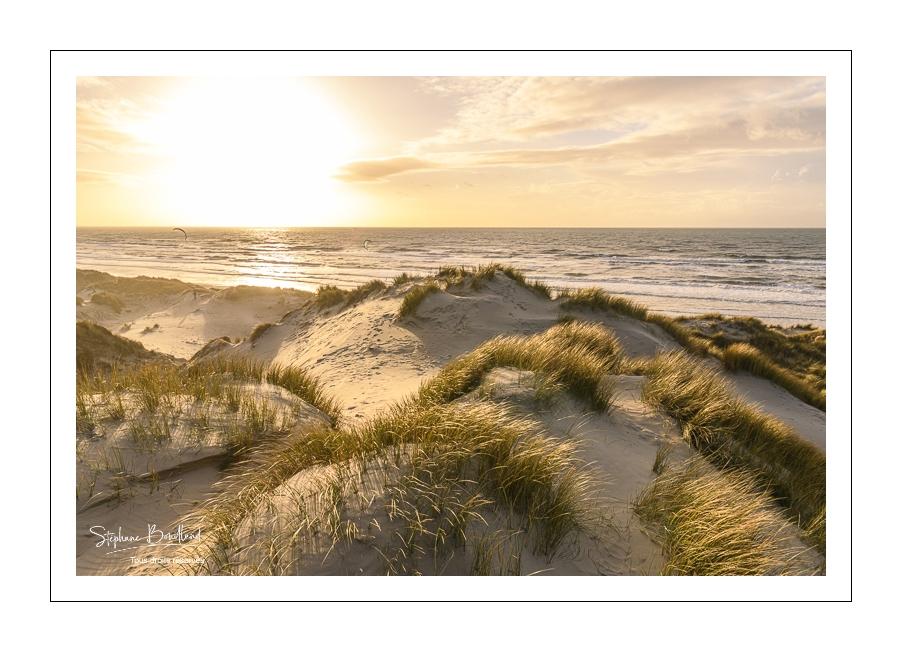 Les dunes du Marquenterre
