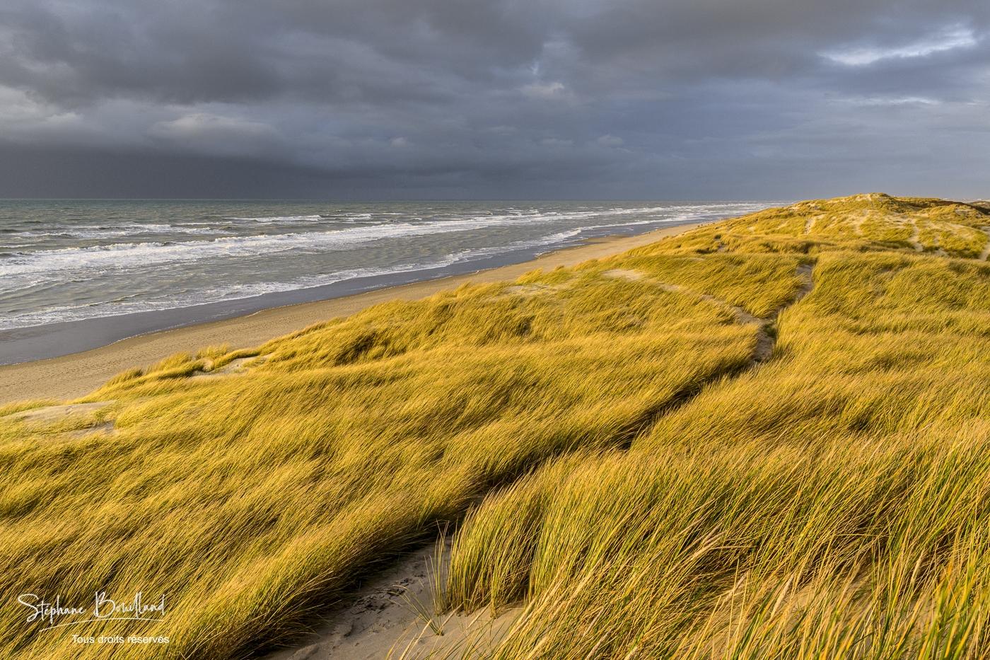 Les dunes du Marquenterre entre Fort-Mahon et la Baie d'Authie en Picardie Maritime